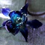 micky-blau