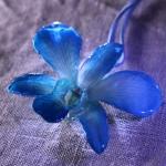dendrobium-blau