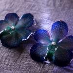 vanda-blau